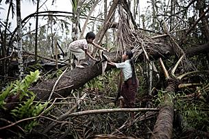 မြန်မာနိုင်ငံတွင် ၂၀၀၈ ခုနှစ် မေလက နာဂစ် မုန်တိုင်းတိုက်ခတ်ပြီးနောက် ဧရာဝတီ မြစ်ဝကျွန်းပေါ် ဒေသတွင် သစ်ပင်များ လဲပြိုနေပုံ ဖြစ်ပါသည်။ (Photo: AFP)