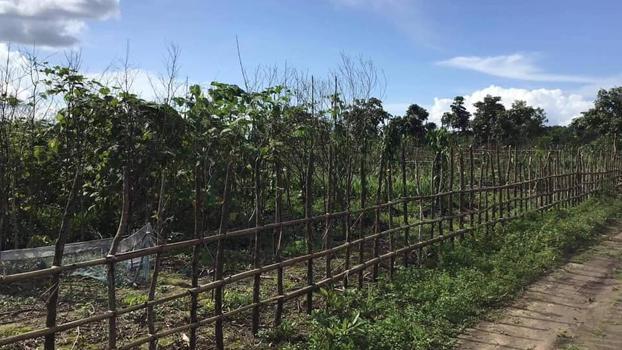 ဘားအံမြို့နယ် ဘင်ဂျီကျေးရွာ နယ်နိမိတ်မှာ အစိုးရ သိမ်းထားတဲ့မြေတွေကို တွေ့ရစဉ်