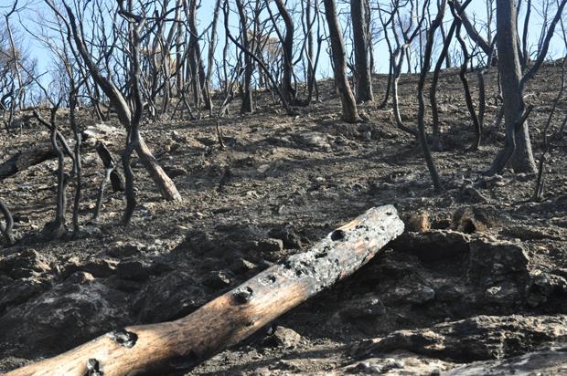 တောမီးလောင်ထားတဲ့ သစ်တောတစ်နေရာကို တွေ့ရစဉ်