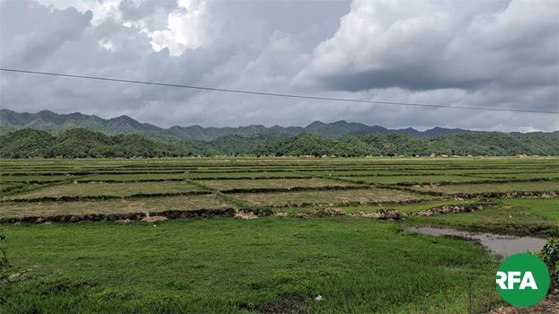 စစ်ပွဲတွေကြောင့် မထွန်ယက်နိုင်သေးတဲ့ မြောက်ဦးမြို့နယ်က လယ်ကွင်းပြင်တွေကို ၂၀၁၉၊ ဇွန် ၂၅ ရက်နေ့က မြင်တွေ့ရစဉ်