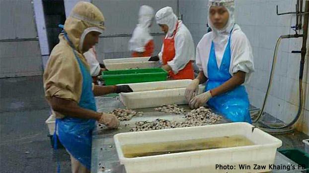တရုတ်နိုင်ငံ  ရှန်းတုံးပြည်နယ် ဝေဟိုင်မြို့က အအေးခန်းပင်လယ်စာထုတ်လုပ်တဲ့စက်ရုံမှာ အလုပ်လုပ်နေတဲ့ မြန်မာအလုပ် သမားတွေကို တွေ့ရစဉ်