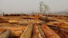 မြန်မာနိုင်ငံမှာ နှစ်စဉ်  အကြောင်းအမျိုးမျိုးကြောင့် ရှိရင်းစွဲ သစ်တောပမာဏရဲ့ တစ်ရာခိုင်နှုန်းကျော်  ပြုန်းတီးနေတယ်လို့ လေ့လာသူတွေက ခန့်မှန်းထားကြပါတယ်။